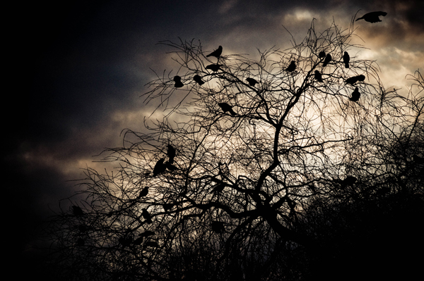 crows 1