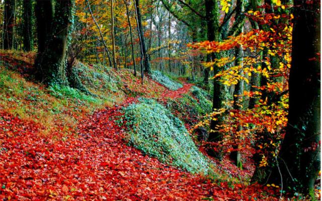 autumn-in-ireland