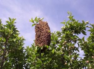 swarm 1