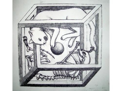 schrodingers-cat 2