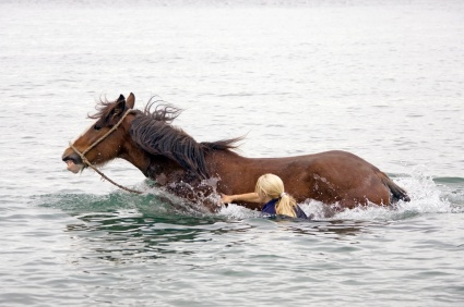 Horse In River1