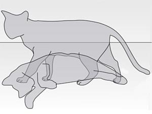 SCHRODINGERS CAT 1