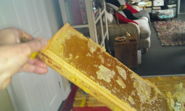 uncapping-the-honey2