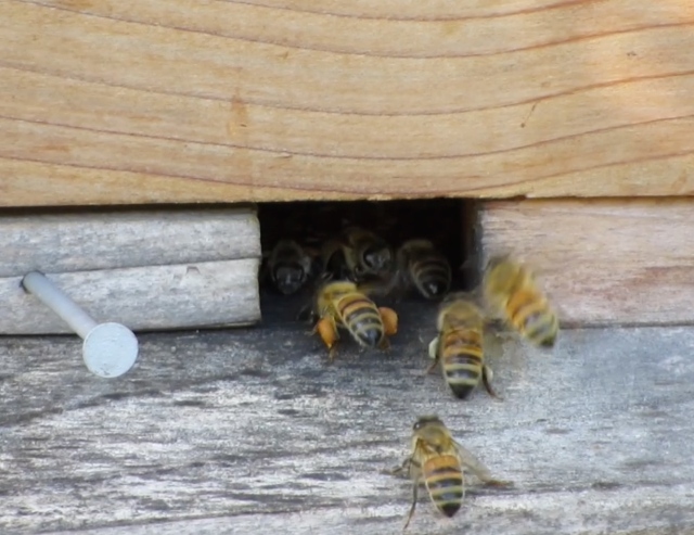 bees-in-winter1